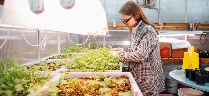 Researcher Maria Goncharova (BSc Biology) conducts knotweed research at TWU.